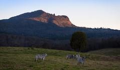 Mount Glennie (dustaway) Tags: mountglennie mountains macphersonrange lastlight landscape shadows palencreek loganvalley queensland australia cattle paddock
