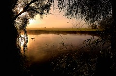 Misty Morn. (richbriggs28. Love being a grandad :)) Tags: thames richbriggs28 river sunrise swan trees wa