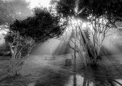 16-11324-HDRp.jpg (kgsix) Tags: lincolncounty newport usa photomatix5 oregon fog sunrise yaquinabaystatepark unitedstates us