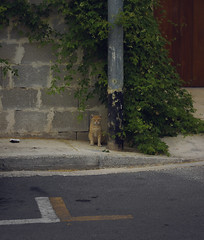 my first upload of a cat (Jamie Toal) Tags: 50mm canon canon550d niftyfifty malta mosta europe travel animals nature