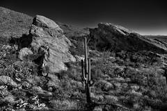 Javelina Rocks as a Backdrop for a Saguaro Cactus (Black & White, Saguaro National Park) (thor_mark ) Tags: nikond800e saguaronationalpark saguaronationalparkrinconmountaindistricteast lookingssw day1 capturenx2edited colorefexpro silverefexpro2 blackwhite desert desertlandscape sonorandesert saguaro cactus carnegieagigantea saguarocactus outside landscape nature sunny blueskies cactusacrossdesertlandscape desertplantlife intermountainwest southwestbasinsandranges southeastarizonaranges huachucaarea rinconmountains mountains mountainsindistance mountainsoffindistance hillsides cactusforestscenicloopdrive cactusforestdrive javelinarocks javelinarocksarea arborescenttreelikecactus engelmanspricklypearcactus opuntiaengelmannii project365 portfolio canvas arizona unitedstates