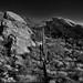 Javelina Rocks as a Backdrop for a Saguaro Cactus (Black & White, Saguaro National Park)
