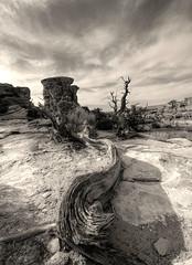 canyonlands in mono... (Baja Juan) Tags: canyonland national park utah desert landscape bw black whie mono desertlife rock cliffs endless skies clouds hdr baja