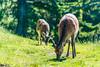 DSC_9526 (Costi Jacky) Tags: france naturereserve parcdemerlet