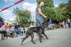 The Mount Pleasant Inn Dog Show - 2016 (Laura Merrill Photos) Tags: mount pleasant inn themountpleasantinn pub publichouse dogshow dog show crufts judging prizes charity eventphotography lauramerrillphotos sheffield