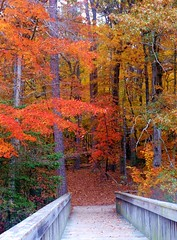 Welcome Autumn!  ( explored) (Artist Victoria Watson) Tags: trees autumn fall firstdayoffall color outdoor bridge tree plants serene nature foliage fallscene