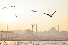 Bosphorus afternoons (marin.tomic) Tags: istanbul turkey trkiye city urban bosphorus water sunset gold mosque skyline travel nikon d90 ferry seagull europe asia magic light sightseeing sultanahmet beyoglu