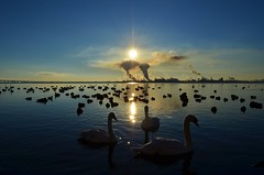 A Thin Line (ryand1975) Tags: morning sun lake ontario canada industry nature water birds burlington geese smog nikon wildlife ducks swans bfg nikonflickraward d5100