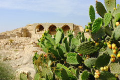 Israel, Bet Guvrin in the Judean lowlands/ flatlands southwest of Jerusalem, remains of a crusader church and cactuses (israel as i see it) Tags: cactus church israel crusader betguvrin guvrin judeanlowlands