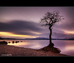 Loch Lomond Tree (Kit Downey) Tags: winter sunset snow mountains tree water lens landscape bay scotland bravo kiss long exposure angle stones wide scottish pebbles tokina filter lone multiple kit loch lomond trossachs hdr x4 downey photomatix ndf ndx1000 milarrochy tokina1116mmf28 canoneos550d rebelt2i
