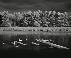 Manawatu River in Infrared (Nadly Aizat) Tags: longexposure trees newzealand summer river sunny shore infrared northisland palmerstonnorth manawatu movingclouds deadbranches 850nm