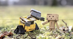 Welcome Danbo (Cammino & Vivo Capovolto ) Tags: nature colors canon 50mm focus bokeh natura f2 welcome claudio colori sfocato walle danbo benvenuto 60d