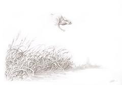 Rabbit (Sergei U. Rukavishnikov) Tags: pencils paper drawing surrealism surreal coloured