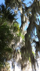 Tree canopy at Rothenbach Park (Sarasota County) Tags: