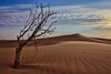 Aldahna Desert (TARIQ-M 2) Tags: sahara landscape sand desert dunes riyadh saudiarabia canoneos5dmarkii tariqm tariqalmutlaq