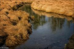 Meandering stream (PRS Images) Tags: stream vancouverisland comox