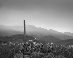 high desert storm (Michael Kenan) Tags: arizona cactus sky white storm black clouds high desert az saguaro sahuaro