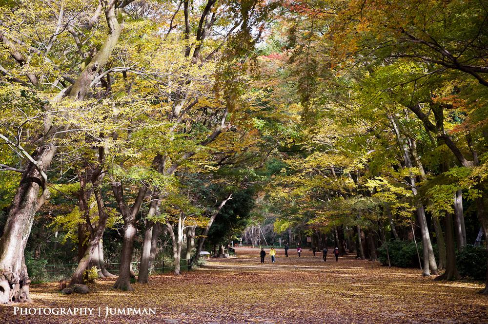 2012_Momiji_20