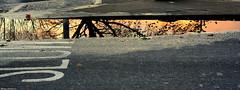 La vida que habita en los charcos / The life that lives in the puddles (Ferny Carreras) Tags: road uk inglaterra autumn trees light england reflection luz water leaves bristol puddle hojas agua arboles carretera unitedkingdom otoño reflejos reinounido charco