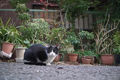 (Tokutomi Masaki) Tags: animal cat tokyo ikebukuro         2013