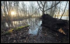 In the Swamp! (bent.christiansen) Tags: wood trees sunset sun tree nature water silhouette forest denmark nikon dusk swamp danmark nikond5000