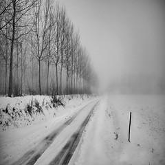 ... il freddo irrita le volpi ... (UBU ) Tags: blancoynegro noiretblanc blues biancoenero ubu unamusicaintesta landscapeinblues luciombreepiccolicristalli