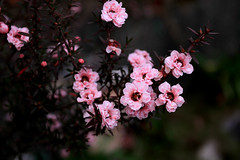 flowers (Ache_Hsieh) Tags: mountain canon eos taiwan 7d l   ef   didital 1740mm4