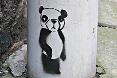 Edinburgh (8333696) Tags: street urban streetart cute art animal wall tin graffiti scotland stencil mural edinburgh paint panda artist scottish can bamboo spray painter spraypaint graff aerosol