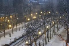 il neige dans la nuit (S amo) Tags: street city trees winter paris lamp night streetlamp hiver calm arbres citylights neige rue nuit ville calme lampadaire peacefull