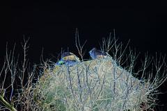 Ghost Birds (psychedelic world) Tags: mannheim luisenpark störche storks nest ghosts birds creepy unheimlich psychedelicworld