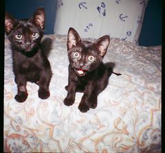 little demons (thbian) Tags: cats mini diana minidiana