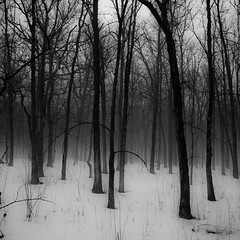 Winter Forest In Fog 001 (noahbw) Tags: trees winter bw mist snow monochrome misty fog forest square landscape blackwhite woods nikon foggy hellernaturecenter d5000 noahbw