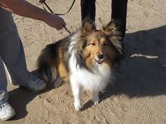 Happy Collie (Patty Mooney) Tags: california family dog bird fun born collie hummingbird sandiego hiking birth young adventure biking naturepreserve missiontrailsregionalpark
