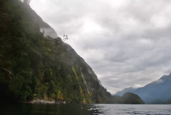 Doubtful Sound (planktons) Tags: new blue camping trees newzealand summer sky sun mist mountain mountains reflection green nature water clouds forest rainforest peak sunny cliffs zealand jungle kayaking nz sound fjord geology wilderness peaks kiwi doubtful fiord fjords doubtfulsound fiords fiordland fiordlands hallarm