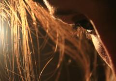 warm (carohernando) Tags: light woman eye girl face hair warm