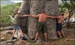 Baumvermessung (tor-falke) Tags: africa plant tree nature landscape african ngc natur safari land afrika landschaft namibia baum afrique namibie swa africalandscape torfalke flickrtorfalke