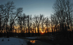 Early Spring Sunset Through Trees (LostMyHeadache: Absolutely Free *) Tags: trees sunset sky snow nature water clouds canon reflections evening twilight glow dusk path silhouettes davidsmith calgaryalbertacanada naturethroughthelens eos60d