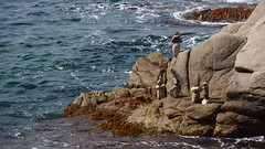 Hard ladies by the sea (mpersson60) Tags: spanien spain costabrava hav sea stenfigurer stoneart
