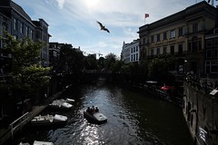Oudegracht Utrecht (NL), Fuji X-E2 + Samyang 12mm F2 (patrick van den hurk) Tags: utrecht oudegracht water bird netherlands fuji fujix fujixseries fujixe2 fujifilm provia xe2 samyang ultrawide samyang12mmf2ncscs