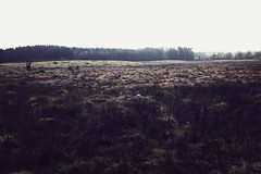 (jean_pichot1) Tags: iphone lowresolution fog space empty damp trees forest horizon far sweden gray overcast brown yellow rain autumn field