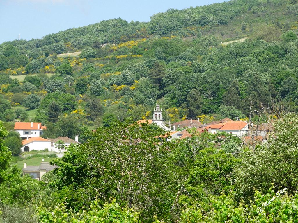 Águas Frias (Chaves) - ... casas e torre da igreja vistas pelo intervalo do arvoredo ...