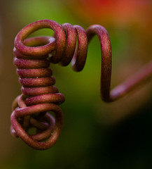 Suspended (risaclics) Tags: 60mmmacro august2016 dominicanrepublic nikond610 flora spiral