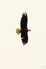 BC Vacation 2016-07-23 041 (Roger's Eye <(r)>) Tags: burnslake britishcolumbia canada ca bc vacation wild life wildlife