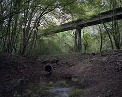 (laurentgaudart) Tags: laurentgaudart photography airtrain arotrain orlans france track rail abandonn abandonned mamiya7ii film argentique forest fort