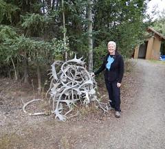 Caribou racks in Bettles