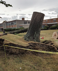trees down at Lutheran High School East 04 - 2016-08-11 (Tim Evanson) Tags: clevelandheightsohio clevelandheightsmicroburst weather trees myhouse