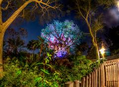 Tree of Life (Disney_Nuts) Tags: treeoflife animalkingdom