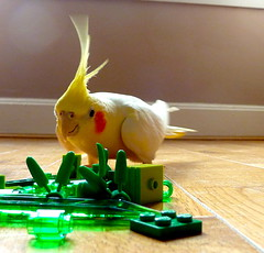 P1090814 (fee-ach) Tags: lego bird avian legobricks toy toys buildingblocks