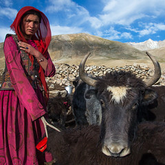 Wakhi nomad woman with a yak, Big pamir, Wakhan, Afghanistan (Eric Lafforgue) Tags: 2024years adult adultsonly afghan afghan214 afghani afghanistan altitude animal anthropolgy badakhshan bigpamir bosgrunniens centralasia colourimage community cultures day headscarf horned indigenousculture ismaili landscape lifestyles livestock lookingatcamera malongzan mountain nomad nomadicpeople oneperson onewomanonly outdoors pamirmountains people photography poverty red serious square tourism traditionalclothing traveldestinations veil wakhancorridor wakhi women womenonly yak wakhan pamir