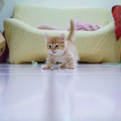 My honey (ChCh Chen) Tags: cats cat life kitten kitty kittens  a6000 24mm